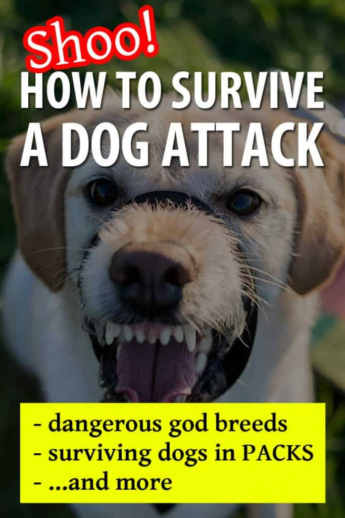 dog attack pinterest image