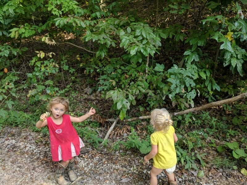 foraging for wild edibles with toddlers