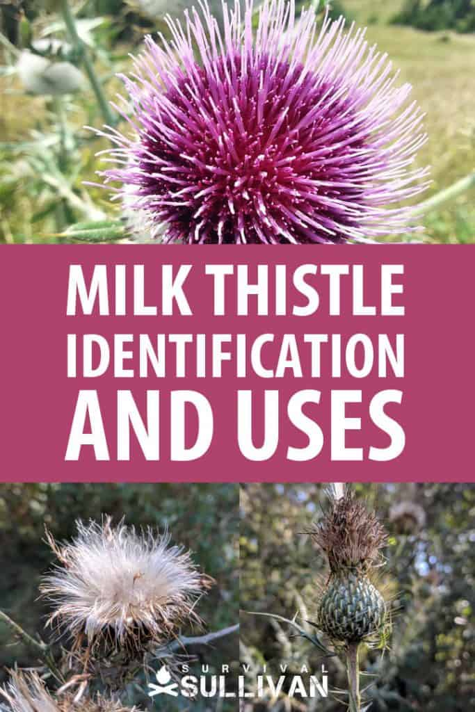 milk thistle Pinterest image