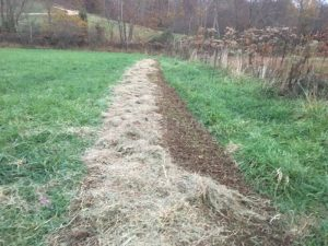 putting hay to cover the soil and seeds