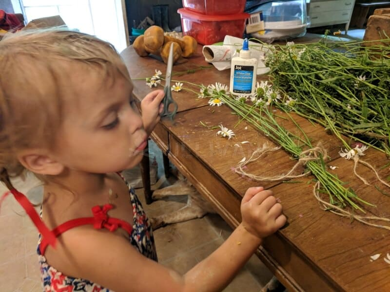toddler helps processing some daisies