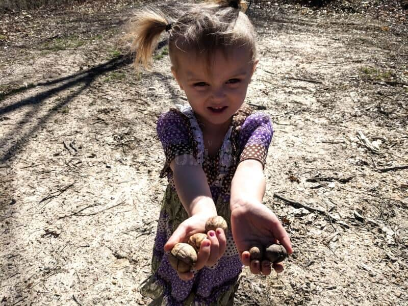 toddler holding walnuts in hand
