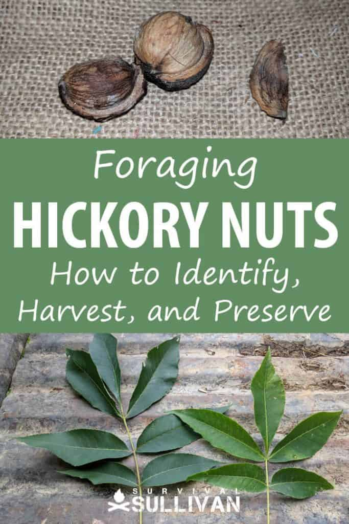 hickory nuts Pinterest image