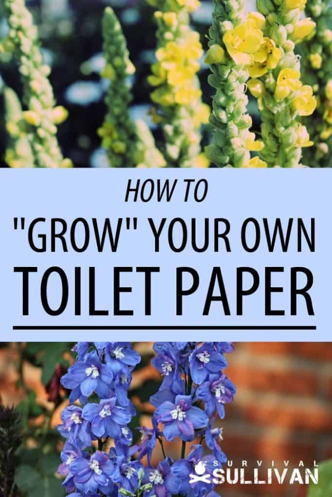 toilet paper plants Pinterest image