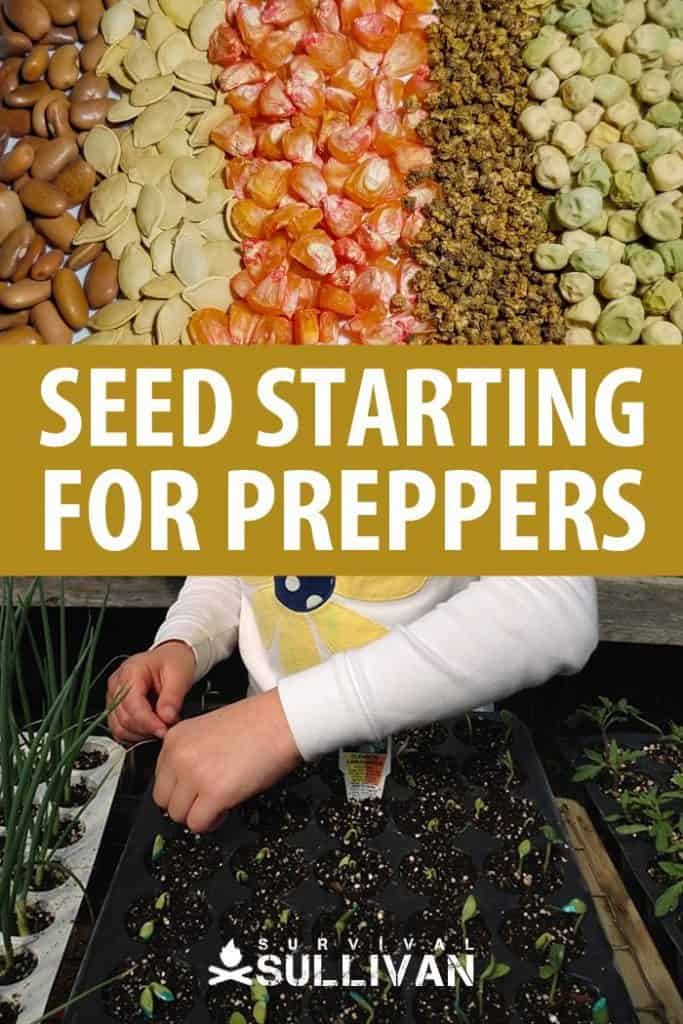 seed starting pinterest image