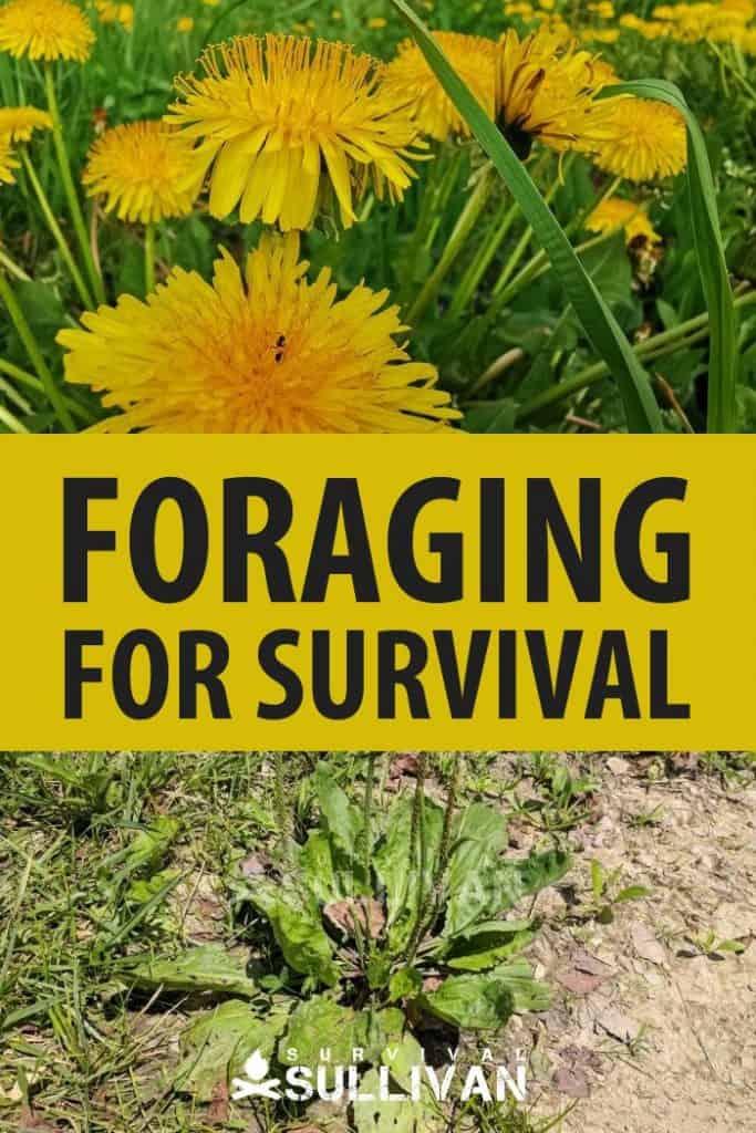 survival foraging Pinterest image