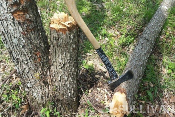 axe next to fallen tree