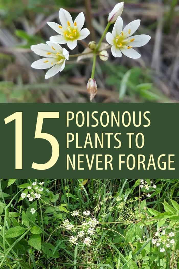 poisonous plants Pinterest image