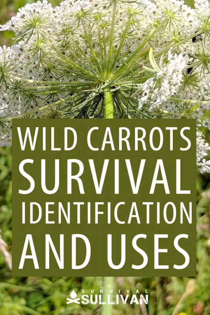 wild carrots Pinterest image