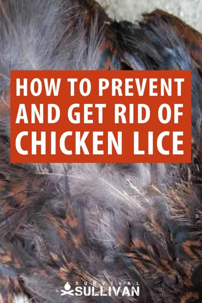 chicken lice Pinterest image