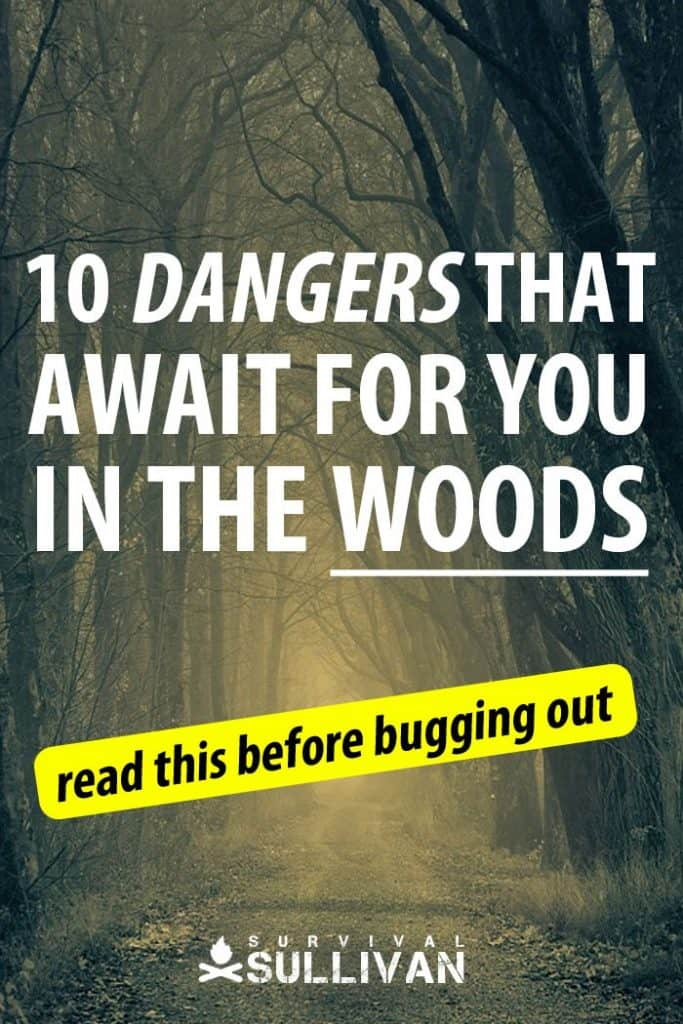 forest dangers Pinterest image