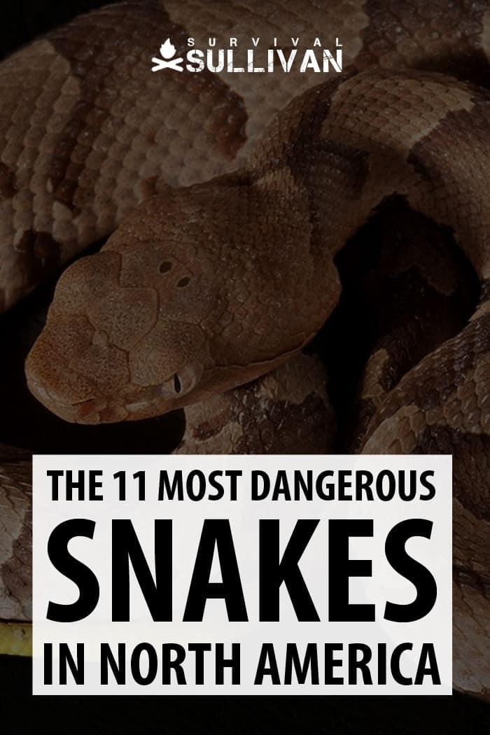 snakes pinterest image