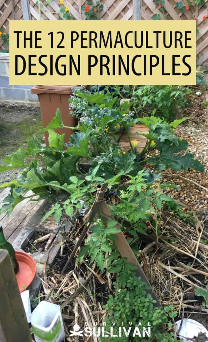 permaculture design principles Pinterest