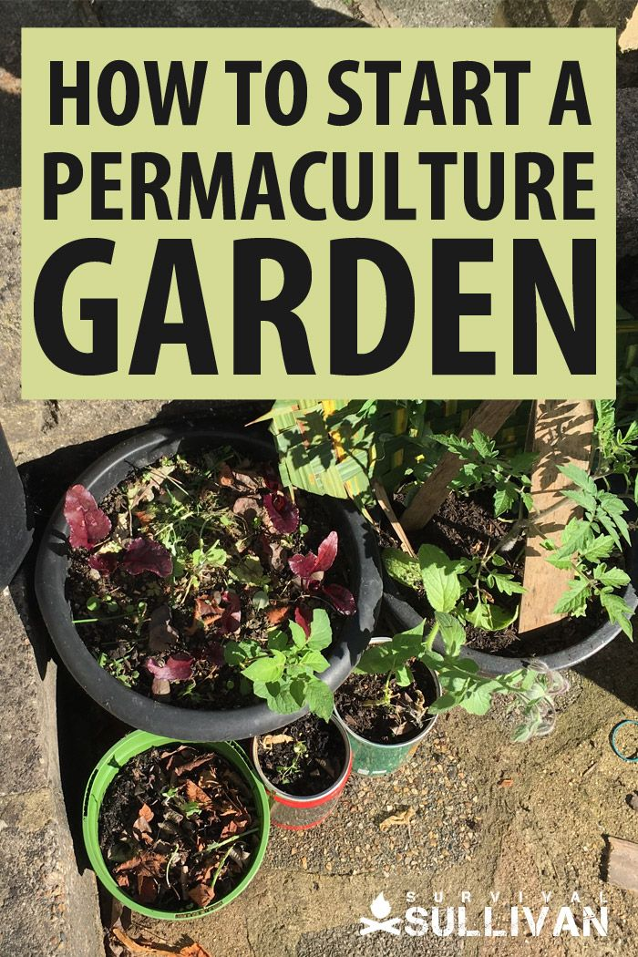 permaculture gardening 101 Pinterest image