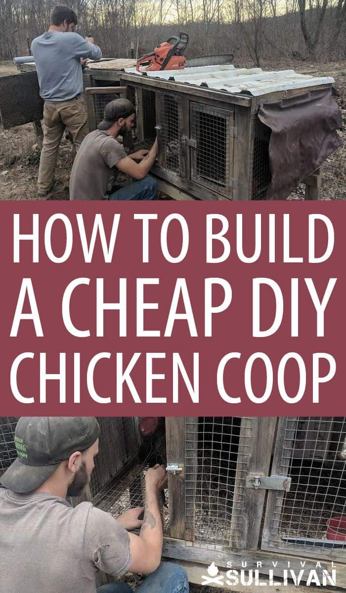 DIY chicken coop Pinterest image