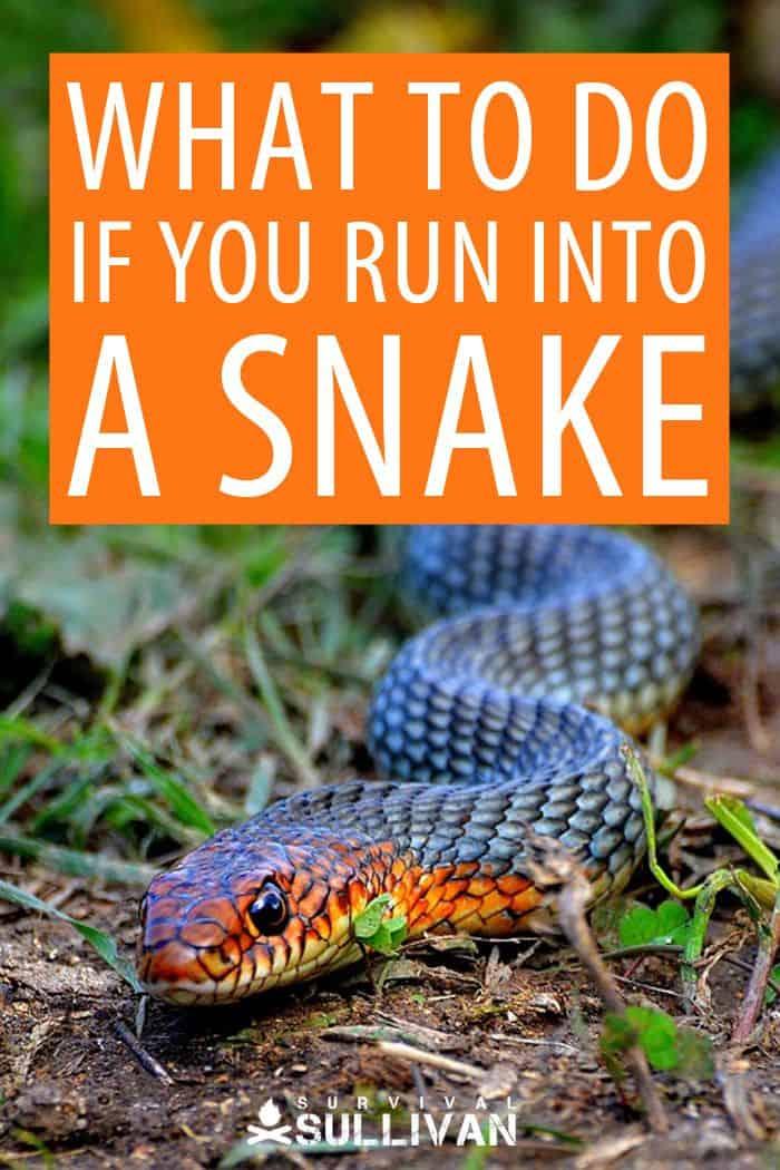 snakes Pinterest