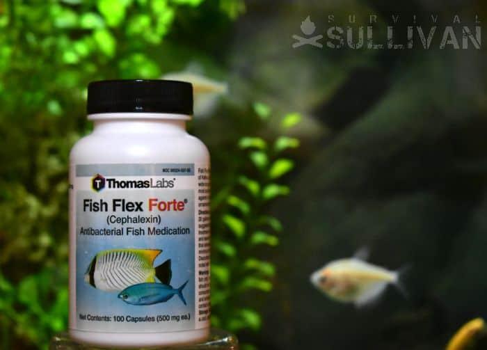 Fish Flex Forte
