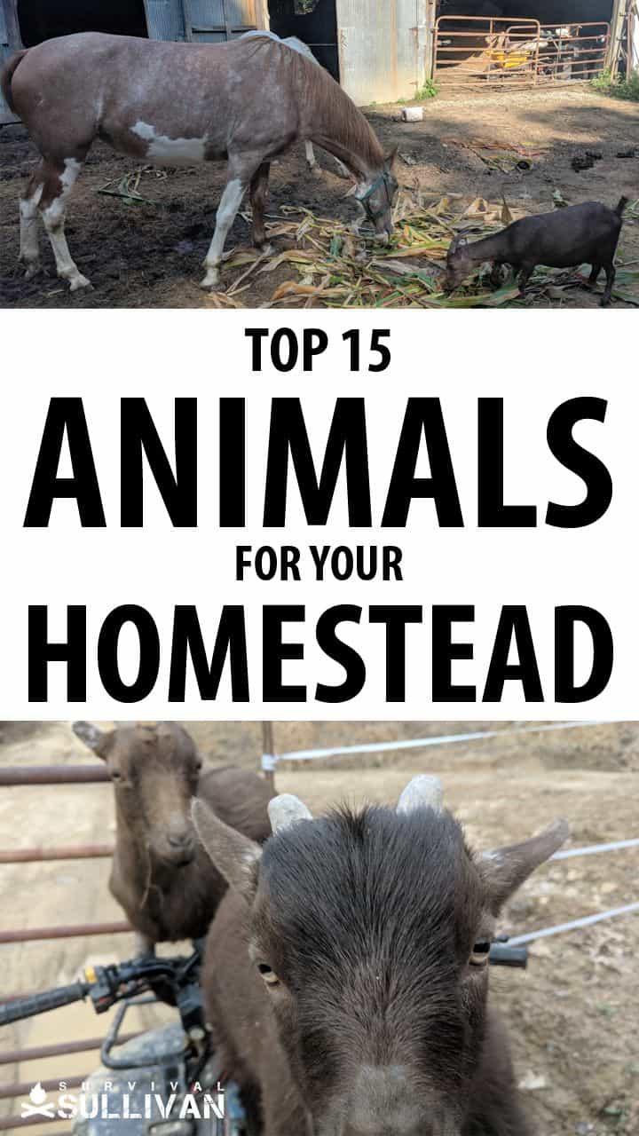 best homesteading animals Pinterest image #2