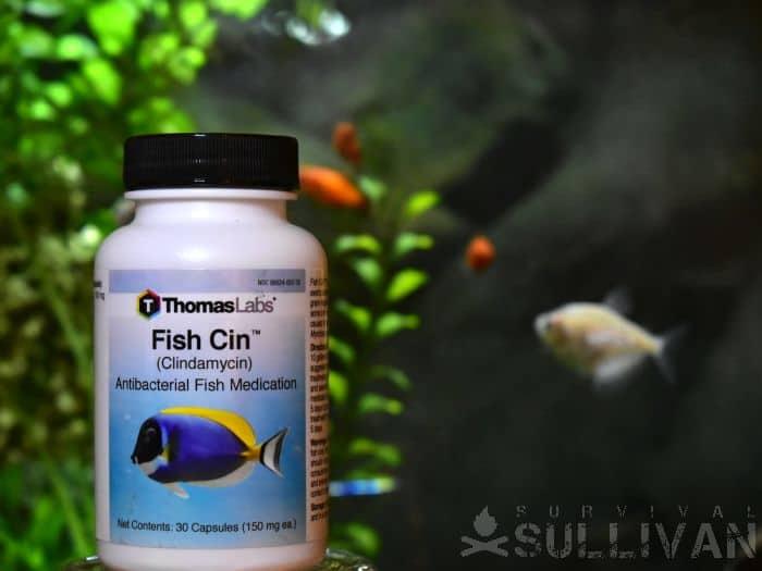 fish substitute for Clindamycin