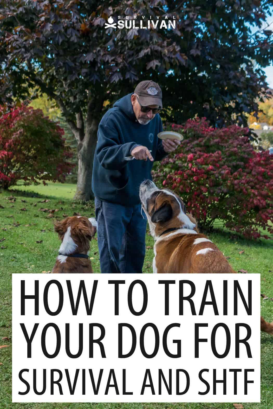 survival dog training pinterest image