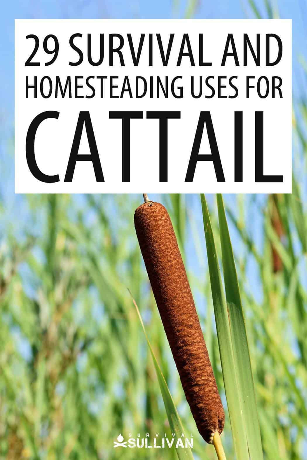 cattail Pinterest image