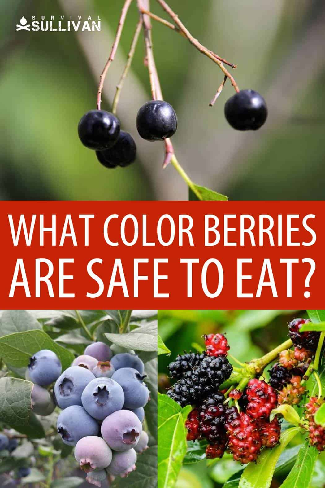 which berries are safe Pinterest image