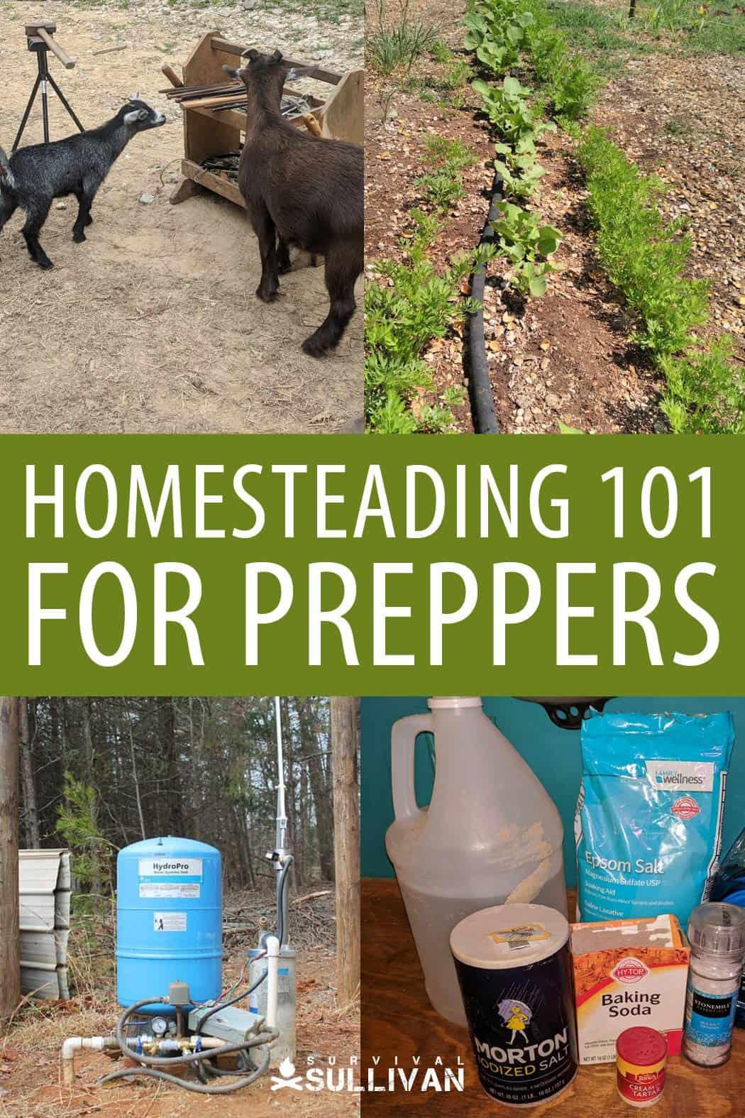 homesteading 101 pi