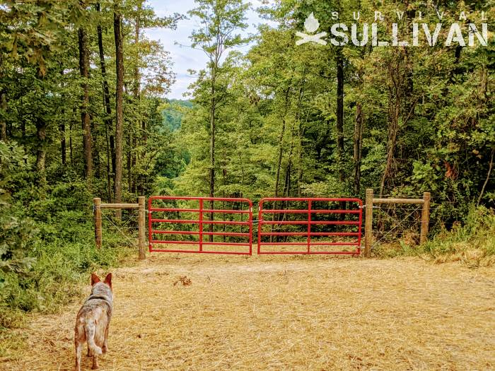 new red painted gates on the property