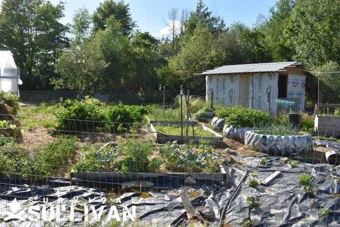 vegetable-harden-next-totool shed on the homestead