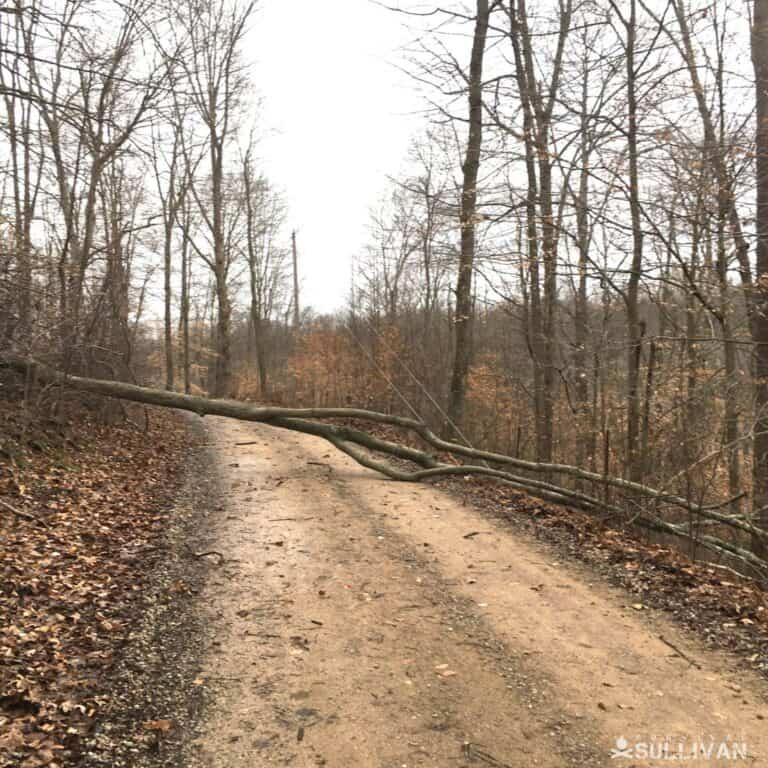 downed tree blocking road
