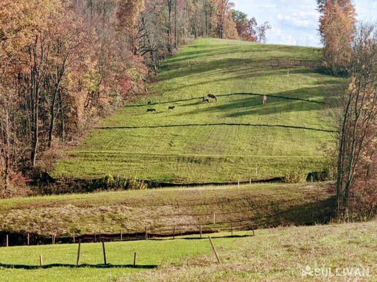 livestock on hill in Vinton County Ohio